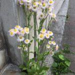 19/2/28 光岡眞里の「あゆみ」メールマガジン【正常性バイアス】